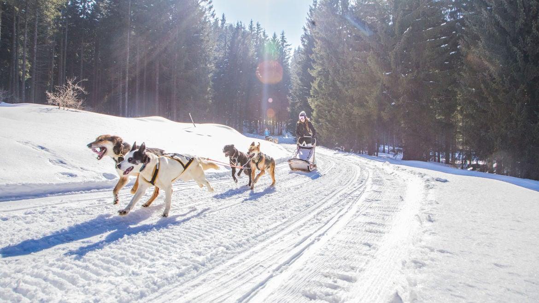 Dog Sledding - Azienda per il turismo Folgaria, Lavarone e Luserna