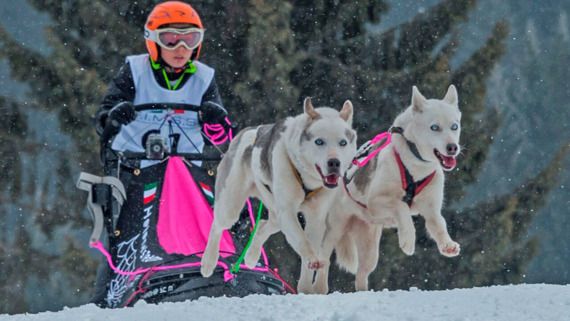 Federal Dog sledding Center